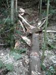 竹やぶパートⅡ